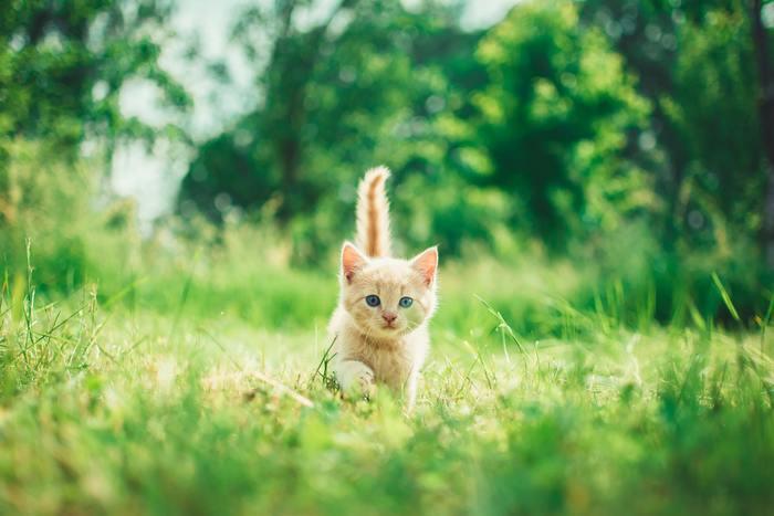 Kitten zindelijk maken