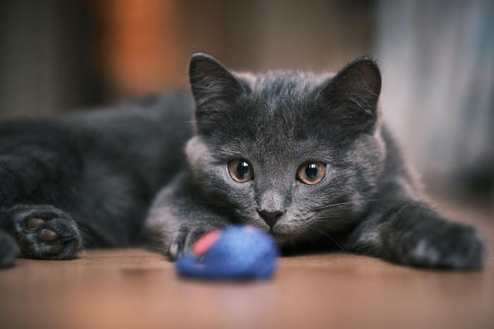 kitten spelen