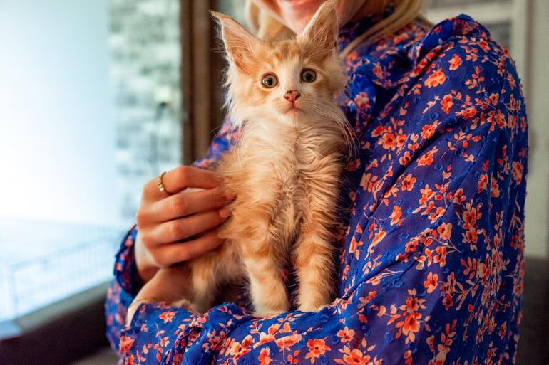 kitten opvoeden