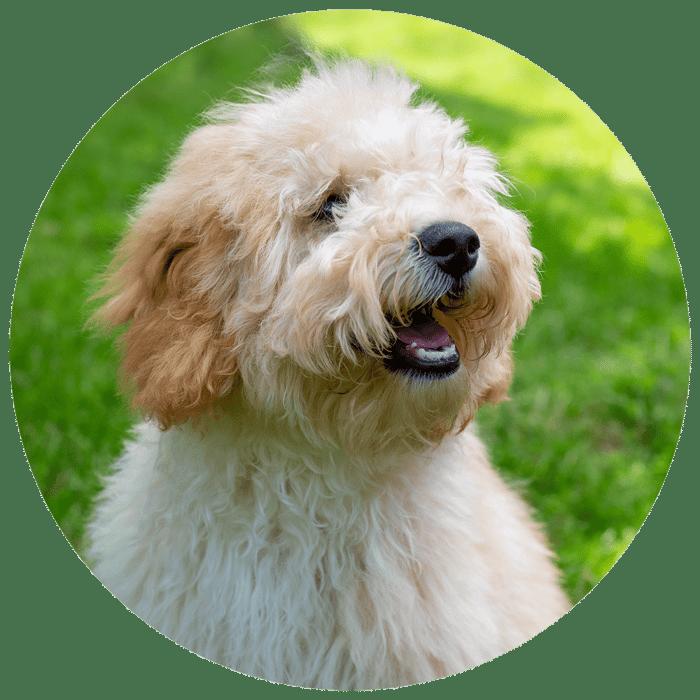 Website Cirkel + hond