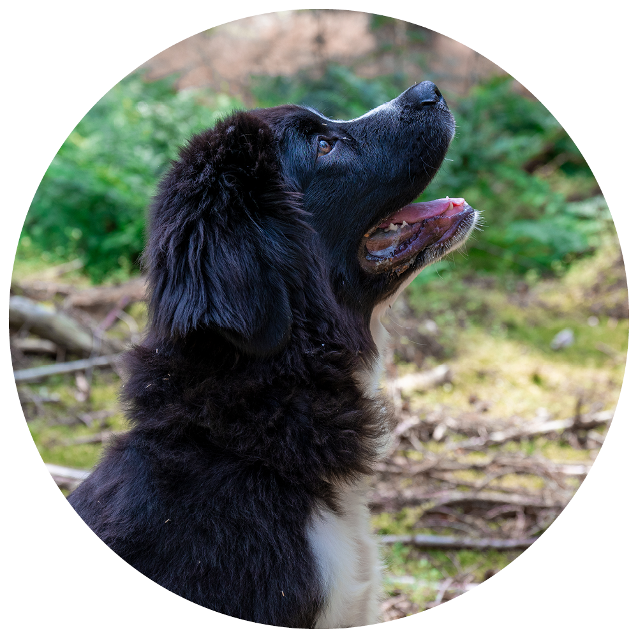 Website Cirkel + hond2
