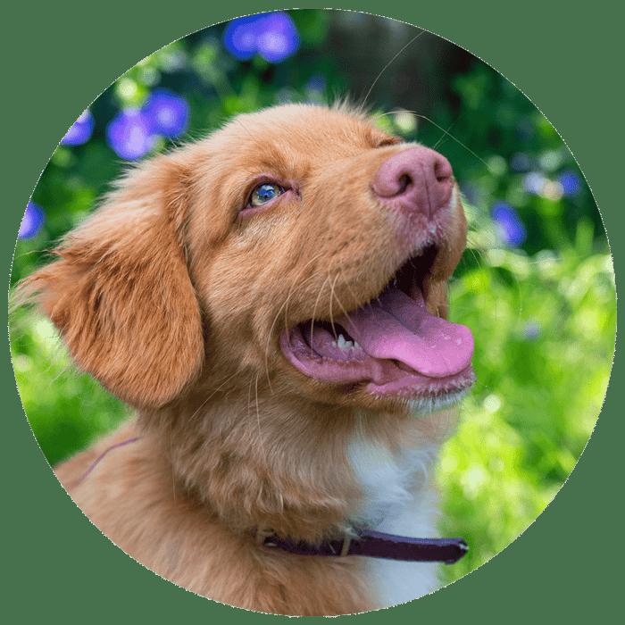 Website Cirkel + puppy