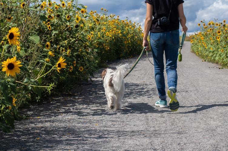 Hond wandelen