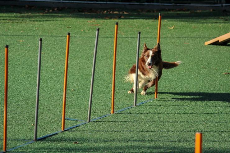Hond sporten
