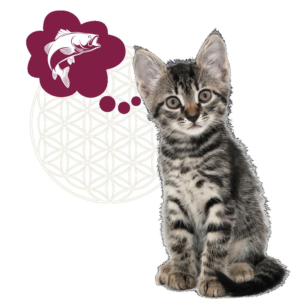 kitten gevlekt + icoon oceaanvis_Tekengebied 1